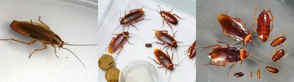 Дезинфекция от тараканов с гарантией в Москве и области