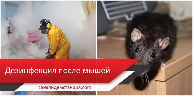 уборка после мышей