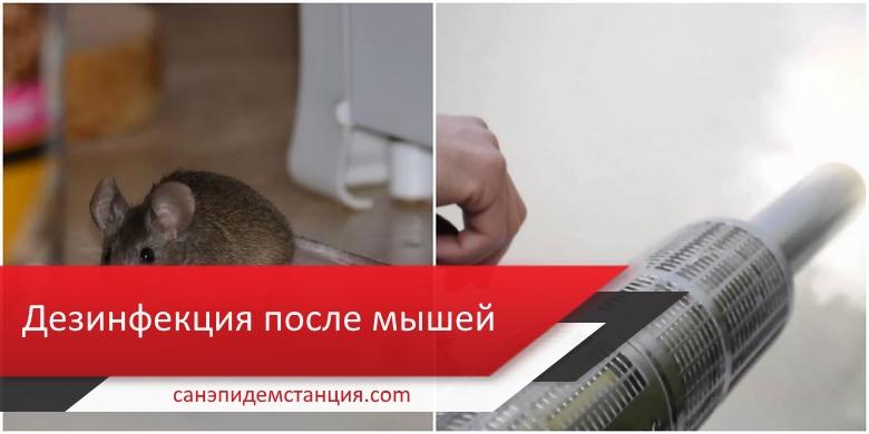 дезинфекция дома от мышей