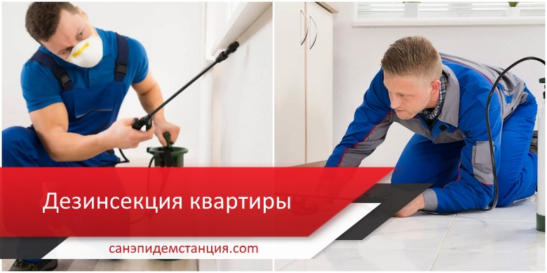дезинсекция квартиры