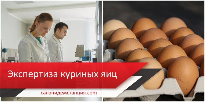 анализ куриных яиц