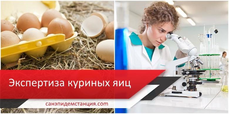 санитарная экспертиза яиц