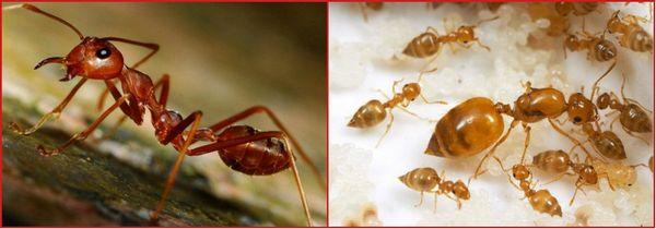 Купить самое эффективное средство от муравьев в квартире и доме: Борьба с муравьями в квартире и саду
