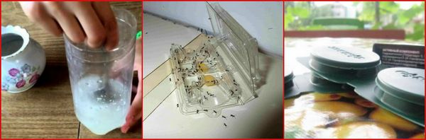 ловушки от муравьев
