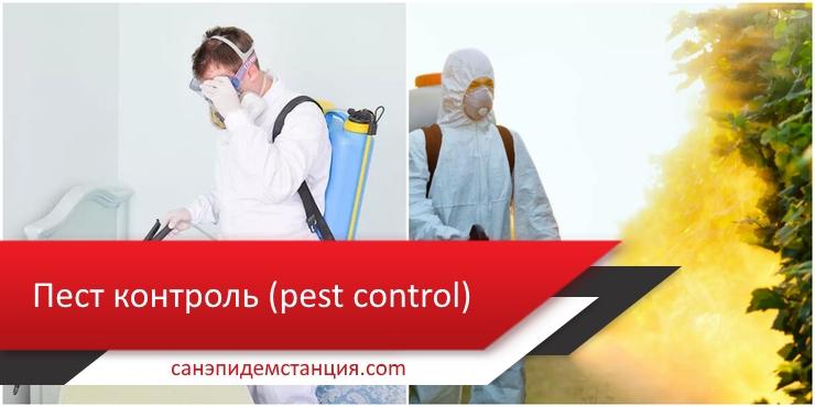 pest контроль