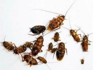 дезинфекция от тараканов Шатура