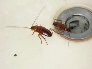 уничтожение тараканов Шатура