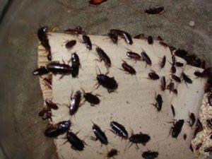 обработка от тараканов Шатура