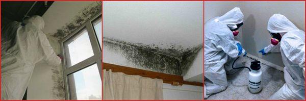 как удалить плесень в квартире