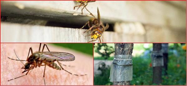уничтожение насекомых на дачном участке