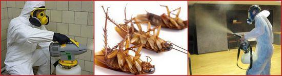 услуги дезинсекции тараканов