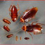 Уничтожение тараканов с гарантией от СЭС