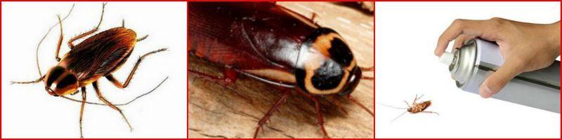 заказать обработку от тараканов в вашей квартире