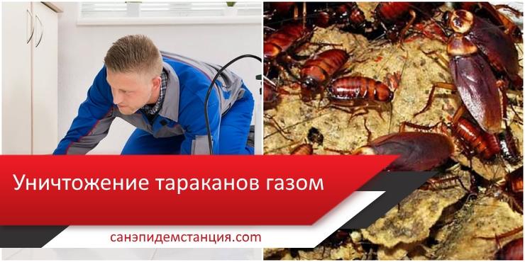 газ от тараканов