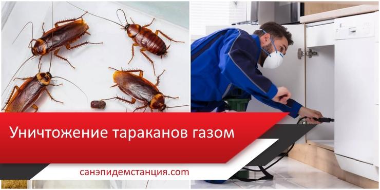 обработка газом от тараканов